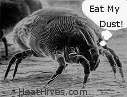 house dust mite, allergies, dust mite hives,